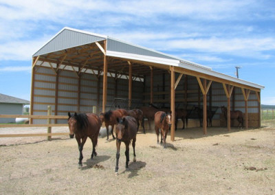 horses around custom built barn